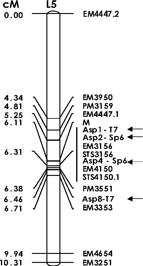 BAC-derived diagnostic markers for sex determination in asparagus