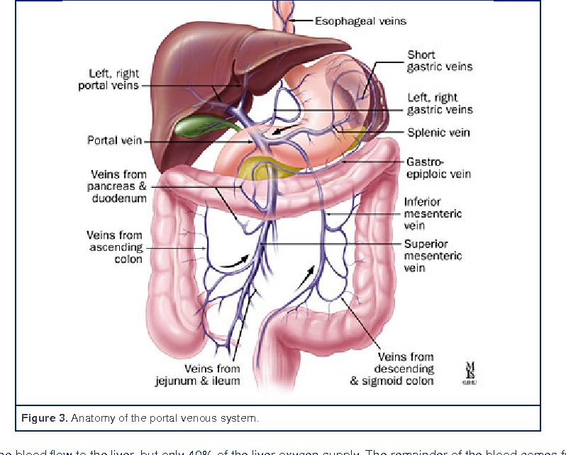 Portal Hypertension Anatomy Semantic Scholar