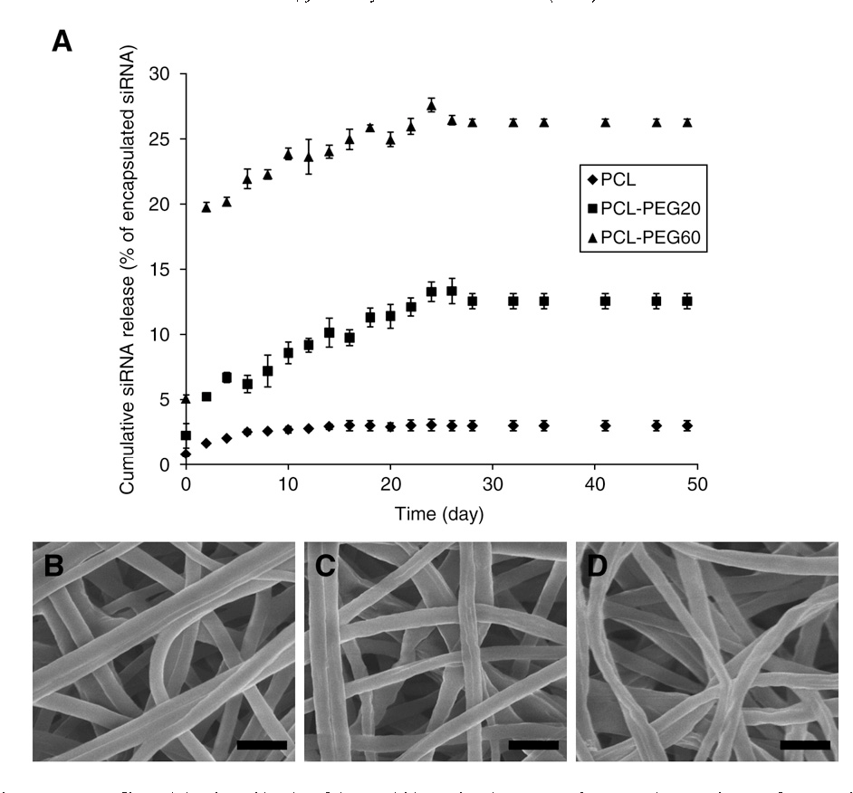 Fig. 2. Release of siRNA from electrospun nanofibers. (A) Release kinetics of siRNA within 49 days in PBS at 37 °C. FESEM images show surface morphology of (B) PCL fibers, (C) PCL– PEG20 fibers and (D) PCL–PEG60 fibers after siRNA release study of 49 days. Scale bars in (B–D)=1 µm.