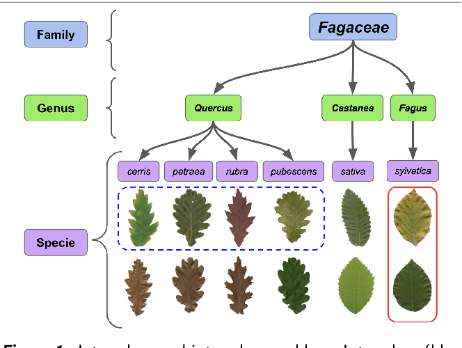 Figure 1 for Two-View Fine-grained Classification of Plant Species