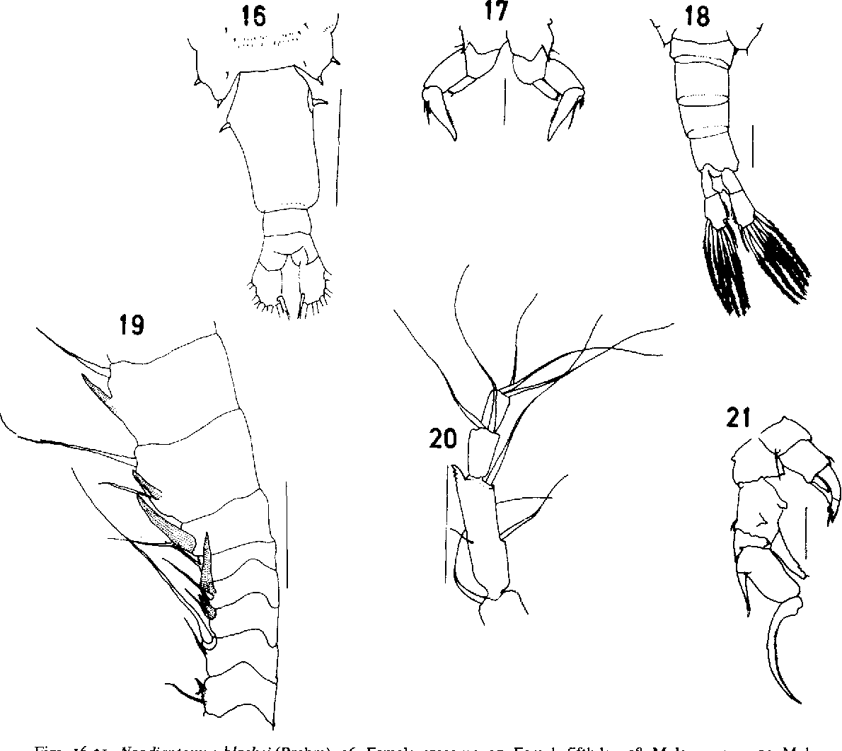 figure 16-21