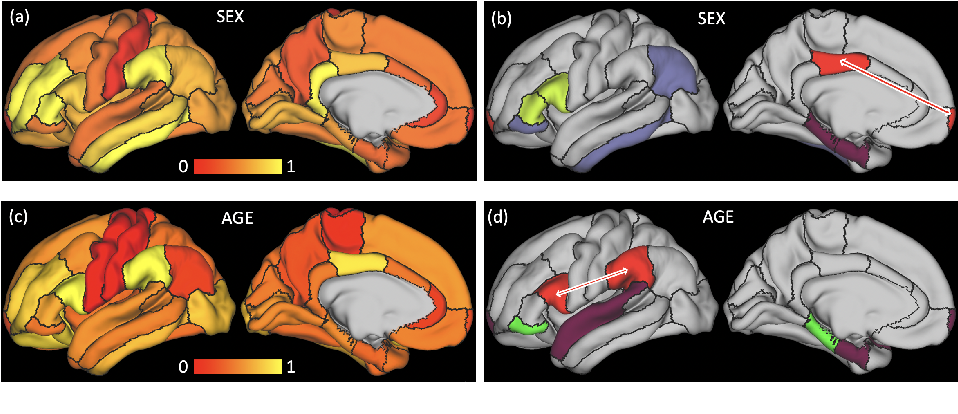 Figure 3 for Spatio-Temporal Graph Convolution for Functional MRI Analysis