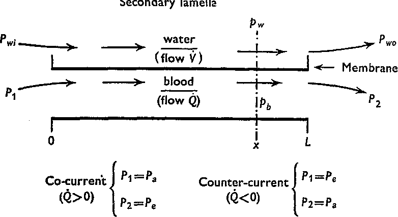 Figure 2 from Oxygen tension. Distribution in water and blood at the on