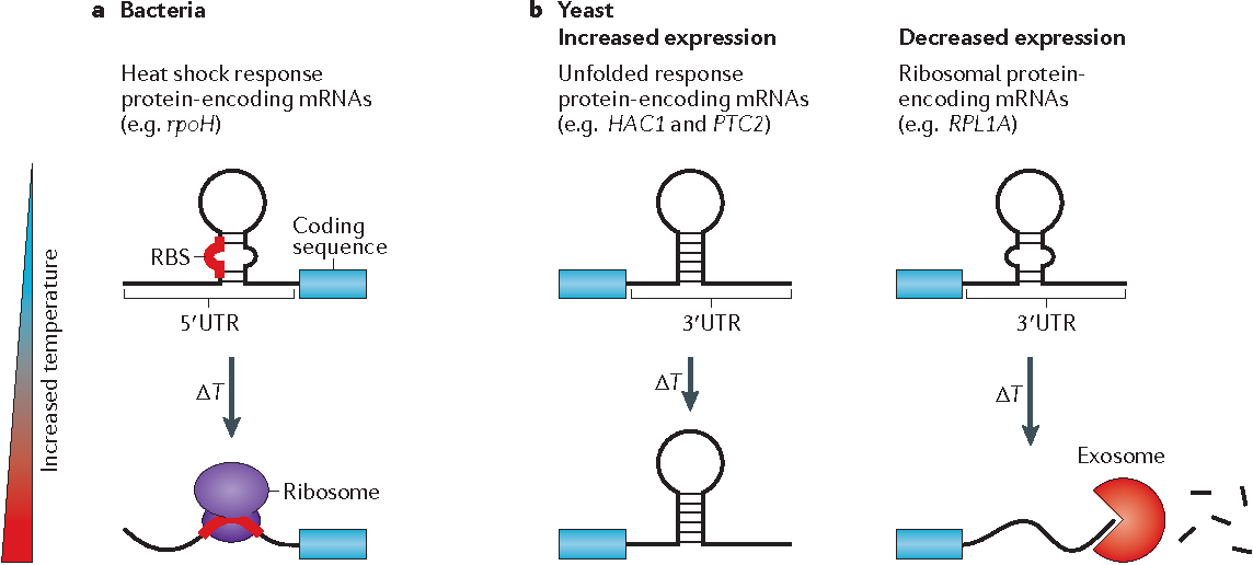 Insights Into Rna Structure And Function From Genome Wide Studies