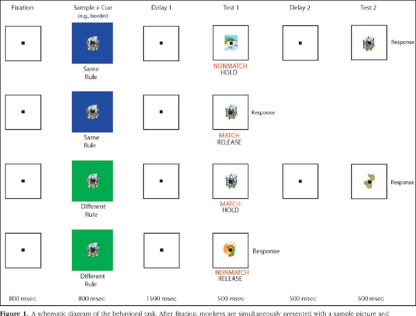 A Comparison Of Abstract Rules In The Prefrontal Cortex Premotor Circuit Diagram Figure 1