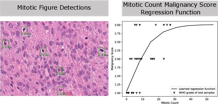 Figure 4 for Automatic and explainable grading of meningiomas from histopathology images