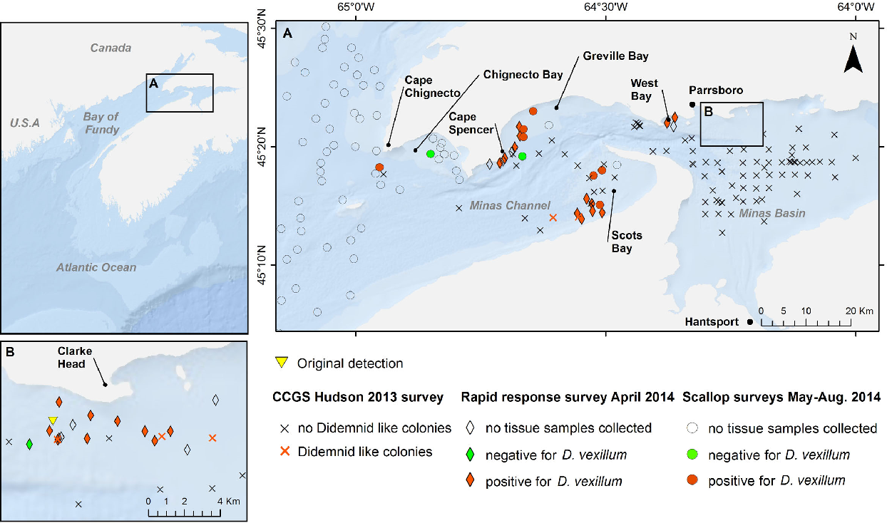 Figure 1 from Distribution of the non-indigenous colonial ascidian ...