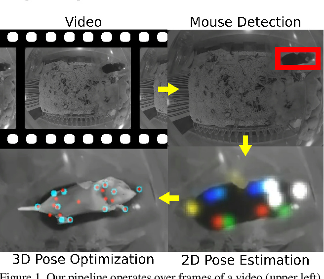 Figure 2 for Optical Mouse: 3D Mouse Pose From Single-View Video