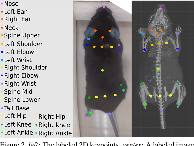 Figure 3 for Optical Mouse: 3D Mouse Pose From Single-View Video