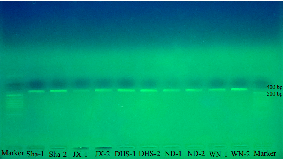 Figure 3 from A DNA Barcode-Based RPA Assay (BAR-RPA) for Rapid