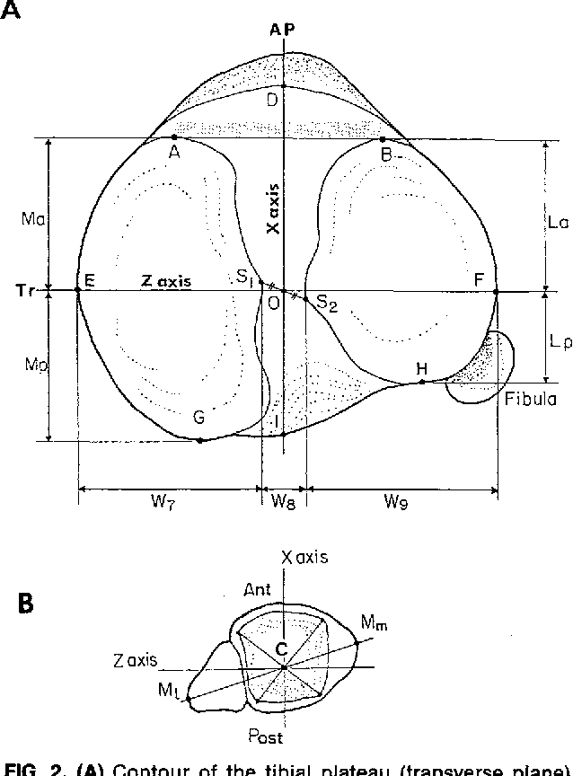 Figure 2 From Tibial Anatomy And Functional Axes Semantic Scholar