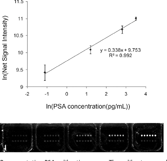 Fig. 1. Representative PSA calibration curve. The calibrator samples were prepared by spiking 0.0, 0.1, 1.0, 5.0, and 10.0 pg/mL of WHO 90:10 PSA standard into human female serum prescreened for PSA (SI Materials and Methods) (Fig. S2). Assuming 100% serum, the final PSA concentrations correspond to a 0.33, 3.3, 16.6, and 33.3 pg/mL calibrator series, accordingly. Samples were run on the automated system with subsequent scanometric detection of the barcode DNA strands released from the 30 nm Au NP probes for PSA target detection and quantification. An example of the gray scale scanometric readout results is shown. The top row of spots in each 2 6 well set is the assay response to PSA barcode DNA obtained from the immunoassay, and the bottom set of six spots is the scanometric assay calibrator response. The zero calibrator (no PSA added) is on the far left, with increasing PSA concentrations, as above, moving to the right. The scanometric DNA calibrator sequence is added at the same concentration in each well set.