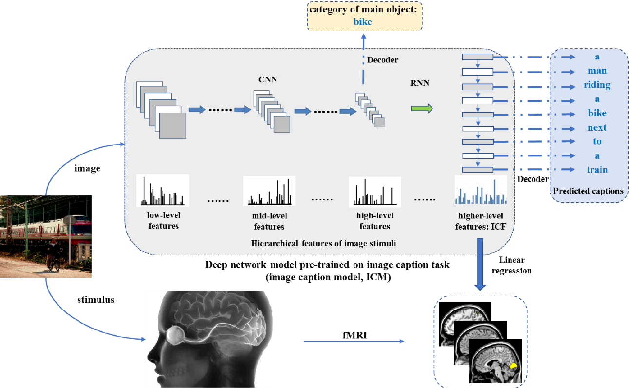 Figure 1 for Neural encoding and interpretation for high-level visual cortices based on fMRI using image caption features