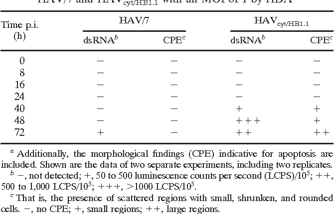 TABLE 3. Proof of HAV dsRNA in FRhK-4 cells infected with HAV/7 and HAVcyt/HB1.1 with an MOI of 1 by HDA a