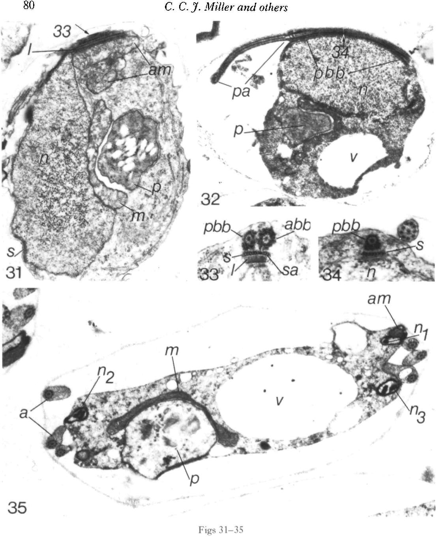 figure 31-35
