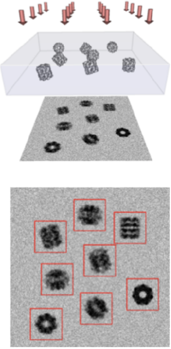 Figure 3 for Differentiable probabilistic models of scientific imaging with the Fourier slice theorem