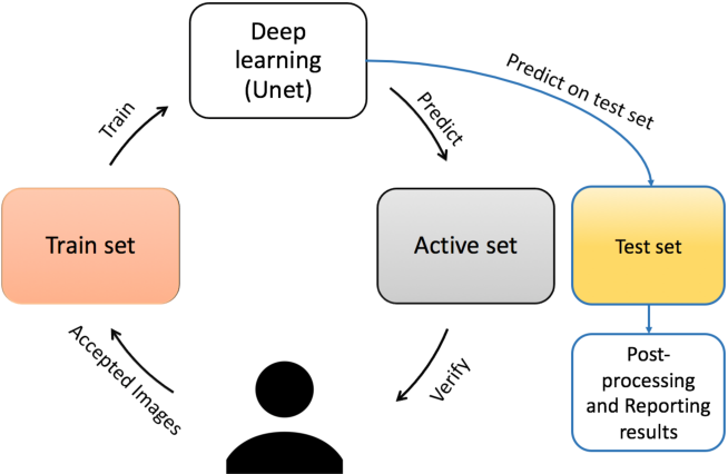 Figure 2 for Iterative Deep Learning Based Unbiased Stereology With Human-in-the-Loop