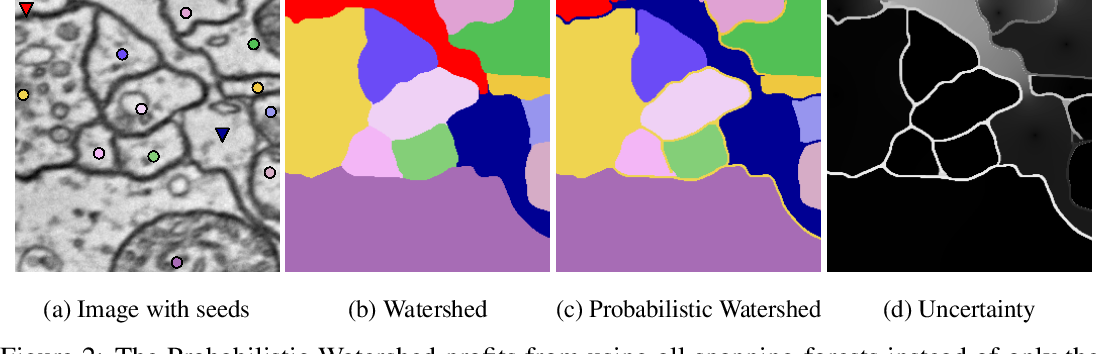 Figure 2 for Probabilistic Watershed: Sampling all spanning forests for seeded segmentation and semi-supervised learning