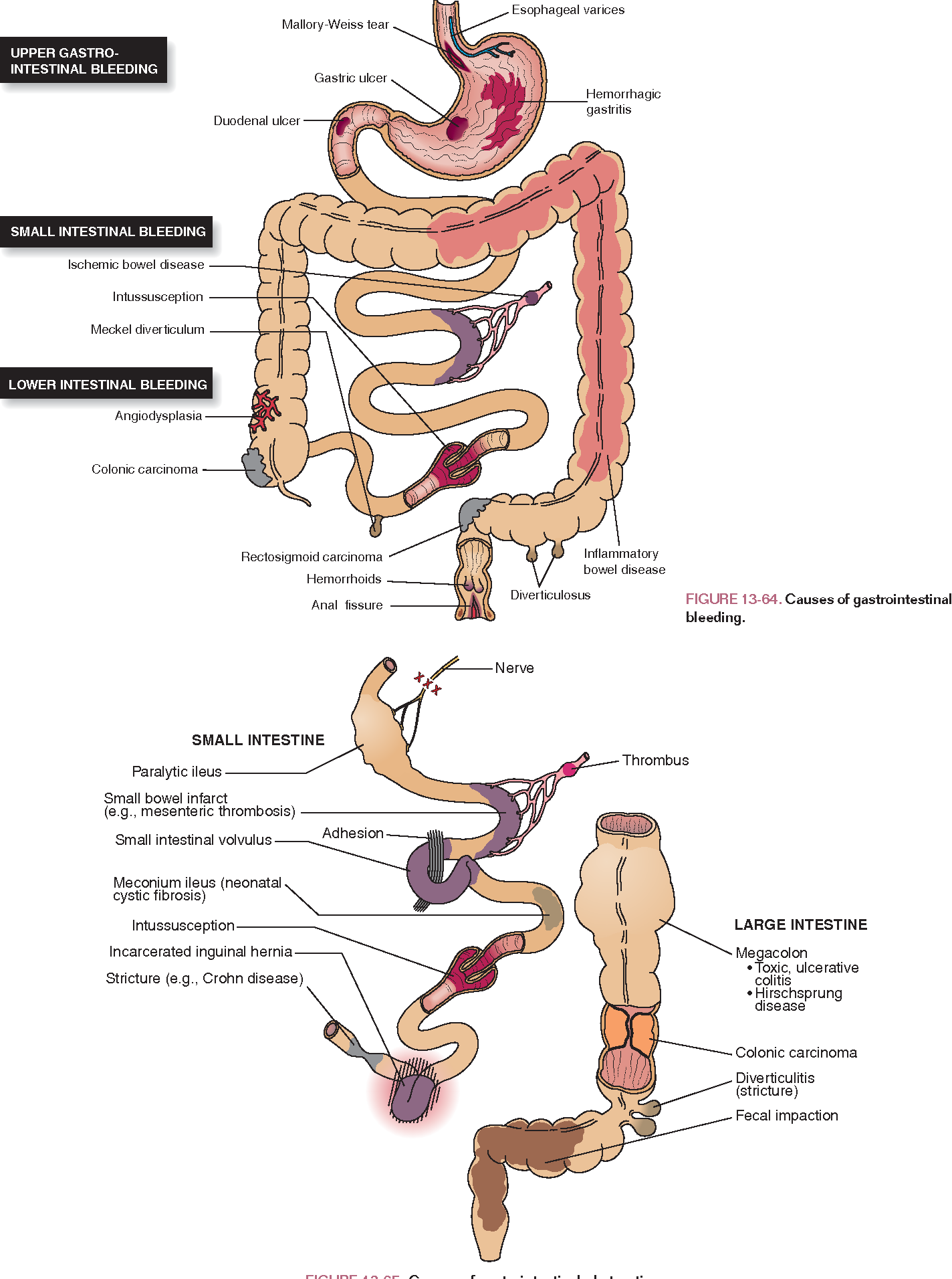 The Gastrointestinal Tract - Semantic Scholar