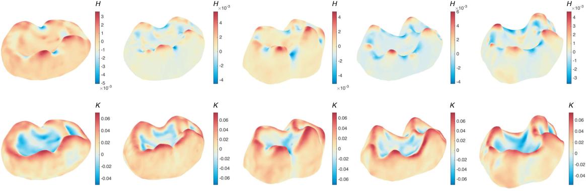 Figure 3 for Shape analysis via inconsistent surface registration