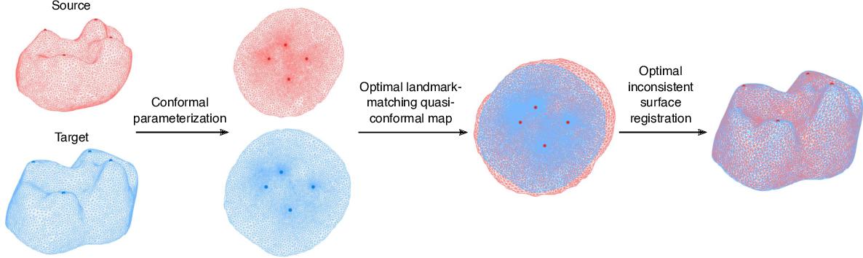 Figure 4 for Shape analysis via inconsistent surface registration
