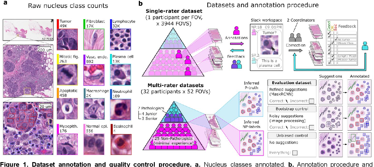 Figure 1 for NuCLS: A scalable crowdsourcing, deep learning approach and dataset for nucleus classification, localization and segmentation