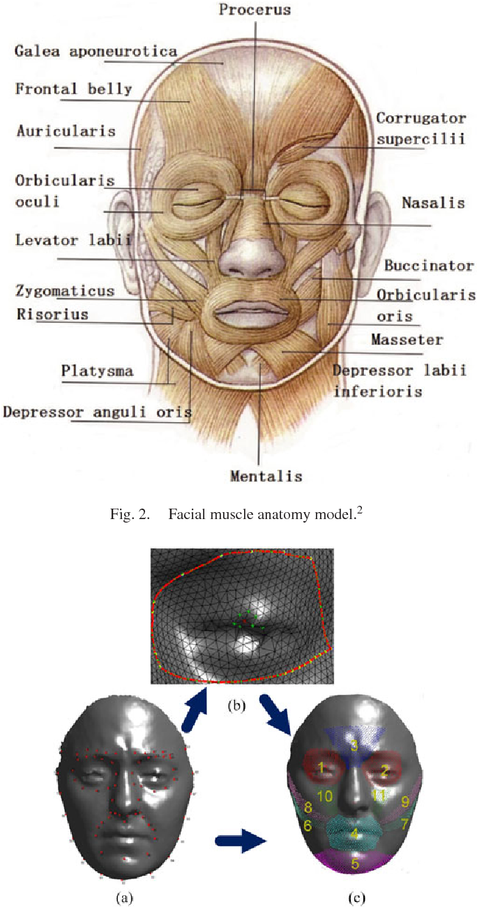 Muscular Movement Model Based Automatic 3d4d Facial Expression