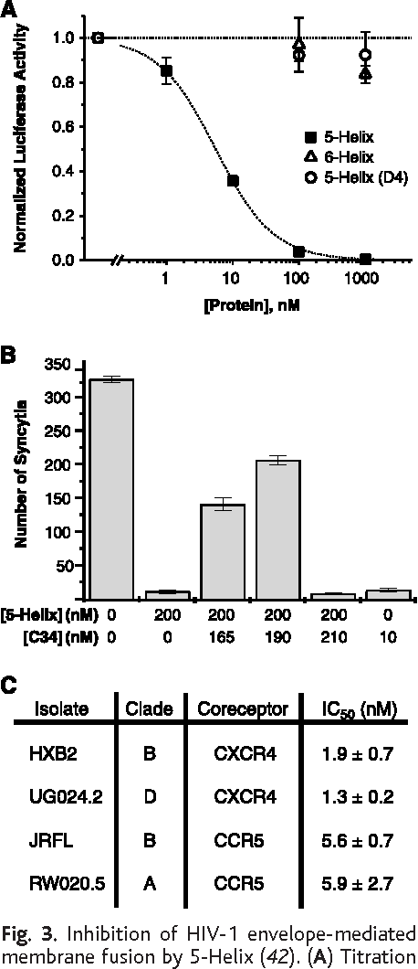 Fig. 3. Inhibition of HIV-1 envelope-mediated membrane fusion by 5-Helix (42). (A) Titration of viral infectivity by 5-Helix (filled squares), 6-Helix (open triangles), and 5-Helix(D4) [open circles (23)]. The data represent the mean 6 SEM of two or more separate experiments. (B) Antagonistic inhibitory activities of 5-Helix and C34. The number of syncytia were measured in a cell-cell fusion assay performed in the absence or presence of 5-Helix, C34, or mixtures of 5-Helix and C34 at the indicated concentrations. The IC50 values for 5-Helix and C34 in this assay are 13 6 3 nM and 0.55 6 0.03 nM (12), respectively. Data represent the mean and range of mean of duplicate measurements, except for the control (mean 6 SEM of five measurements). (C) Shown is 5-Helix inhibition of pseudotyped virus containing different HIV-1 envelope glycoproteins. The reported IC50 values represent the mean 6 SEM of three independent experiments.