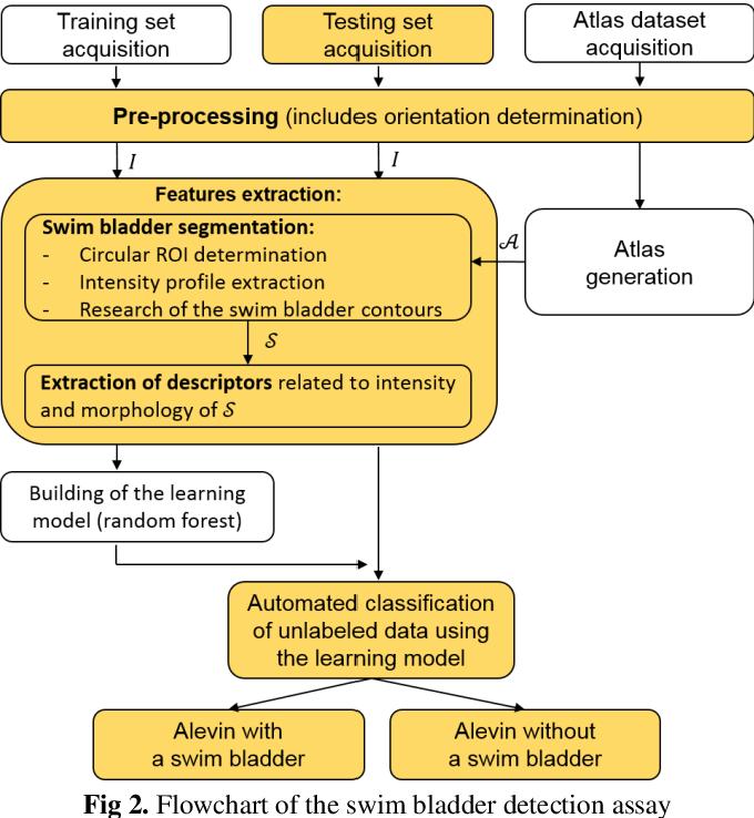 Figure 3 for Atlas-based automated detection of swim bladder in Medaka embryo