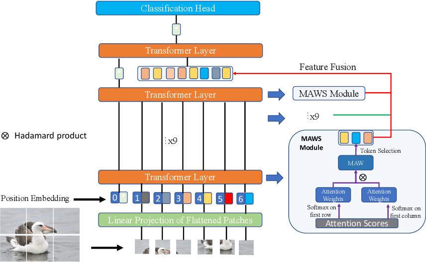 Figure 3 for Feature Fusion Vision Transformer for Fine-Grained Visual Categorization