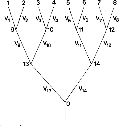 FIG. 8.-An example of a phylogeny, assumed known, from which we can define independent contrasts between taxa. This tree is highly symmetric, so that Ii, = iI) = V3 4 5 V6 = V7 = V8, V9 = =V1 = 1I12, and V13 = Vl14.