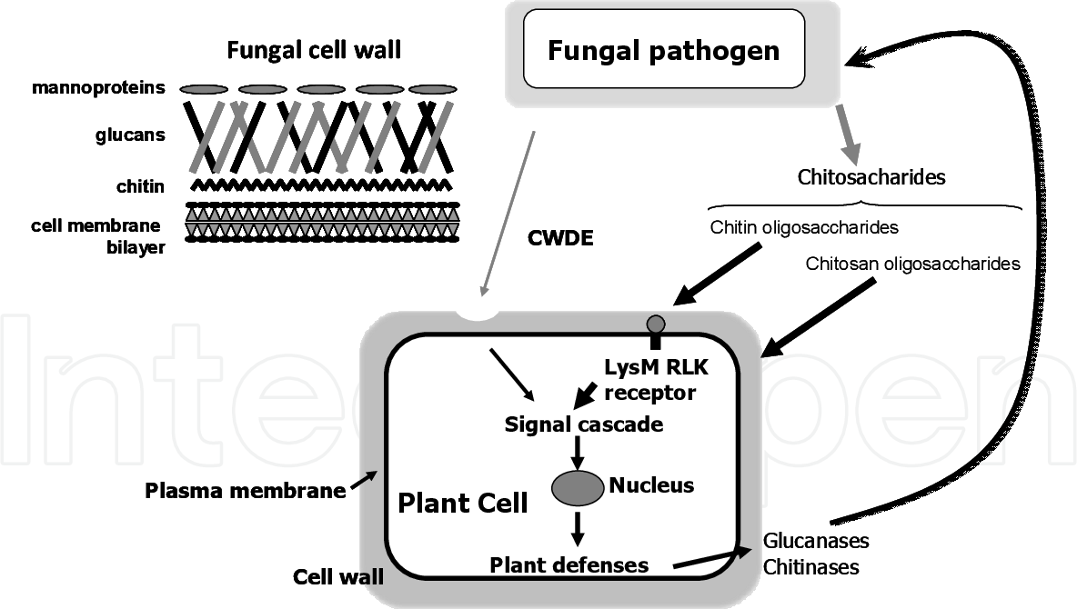 PDF] Exploiting Plant Innate Immunity to Protect Crops Against