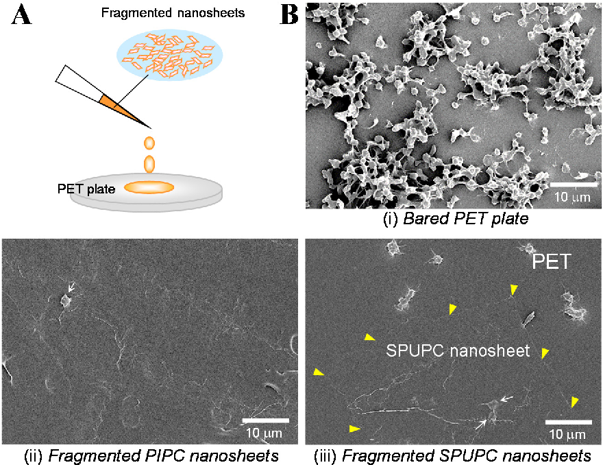 Patchwork Coating of Fragmented Ultra-Thin Films and Their