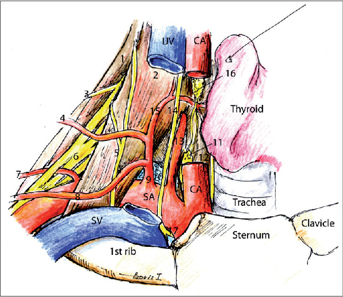 Applied sonoanatomy of the posterior triangle of the neck - Semantic ...