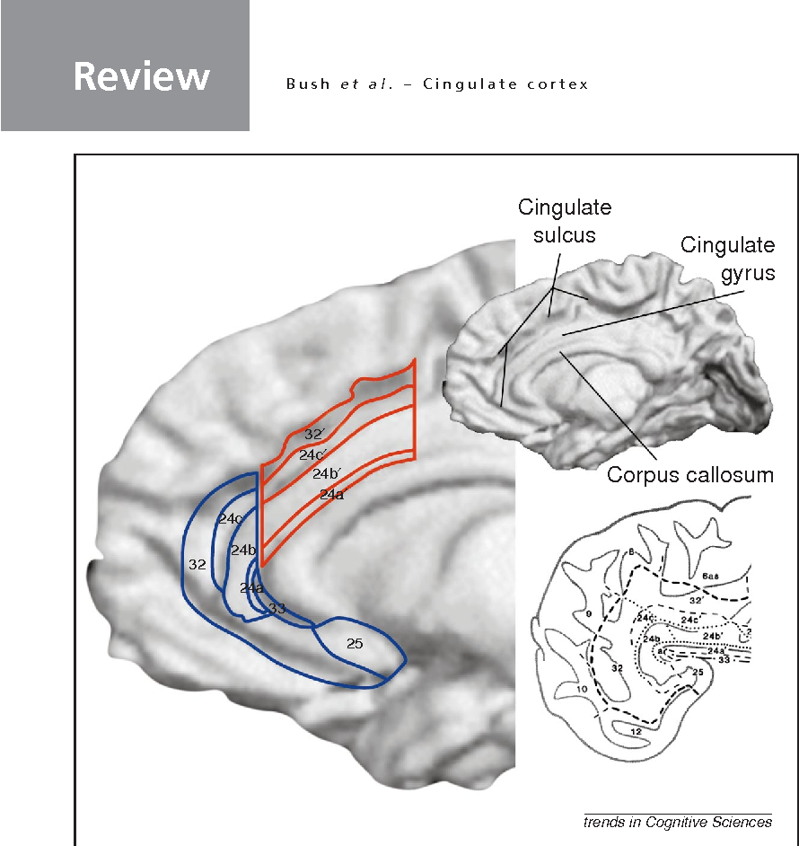 Cognitive and emotional influences in anterior cingulate cortex ...