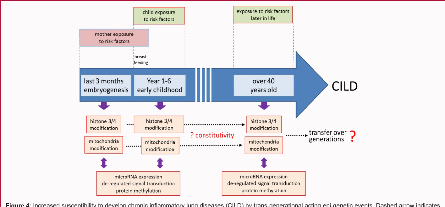 Figure 4: Increased susceptibility to develop chronic inflammatory lung diseases (CILD) by trans-generational acting epi-genetic events. Dashed arrow indicates missing prove of inherited epi-genetic events.