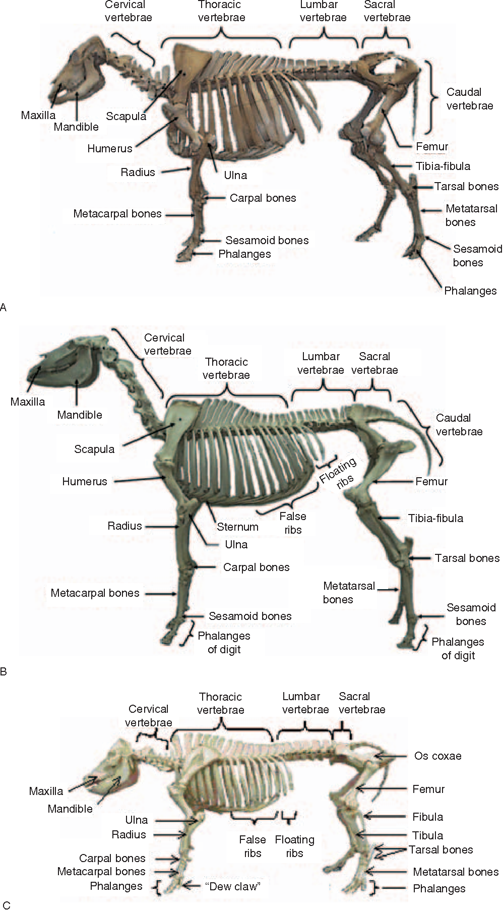 Charmant Functional Anatomy And Physiology Of Domestic Animals ...
