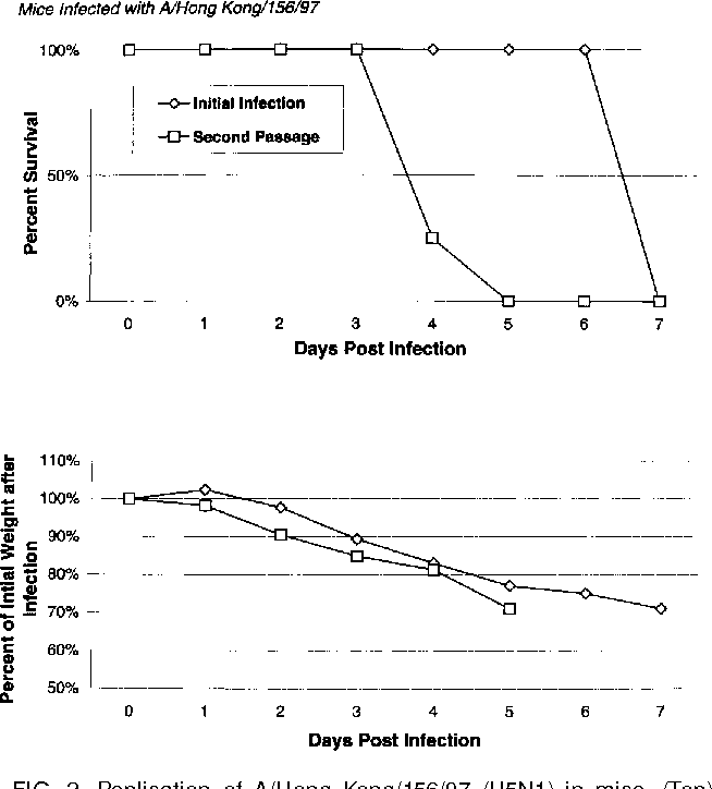 FIG. 2. Replication of A/Hong Kong/156/97 (H5N1) in mice. (Top) Percentage survival after first and second passage in Balb/c mice. (Bottom) Percentage of weight loss of the first and second passage in Balb/c mice.