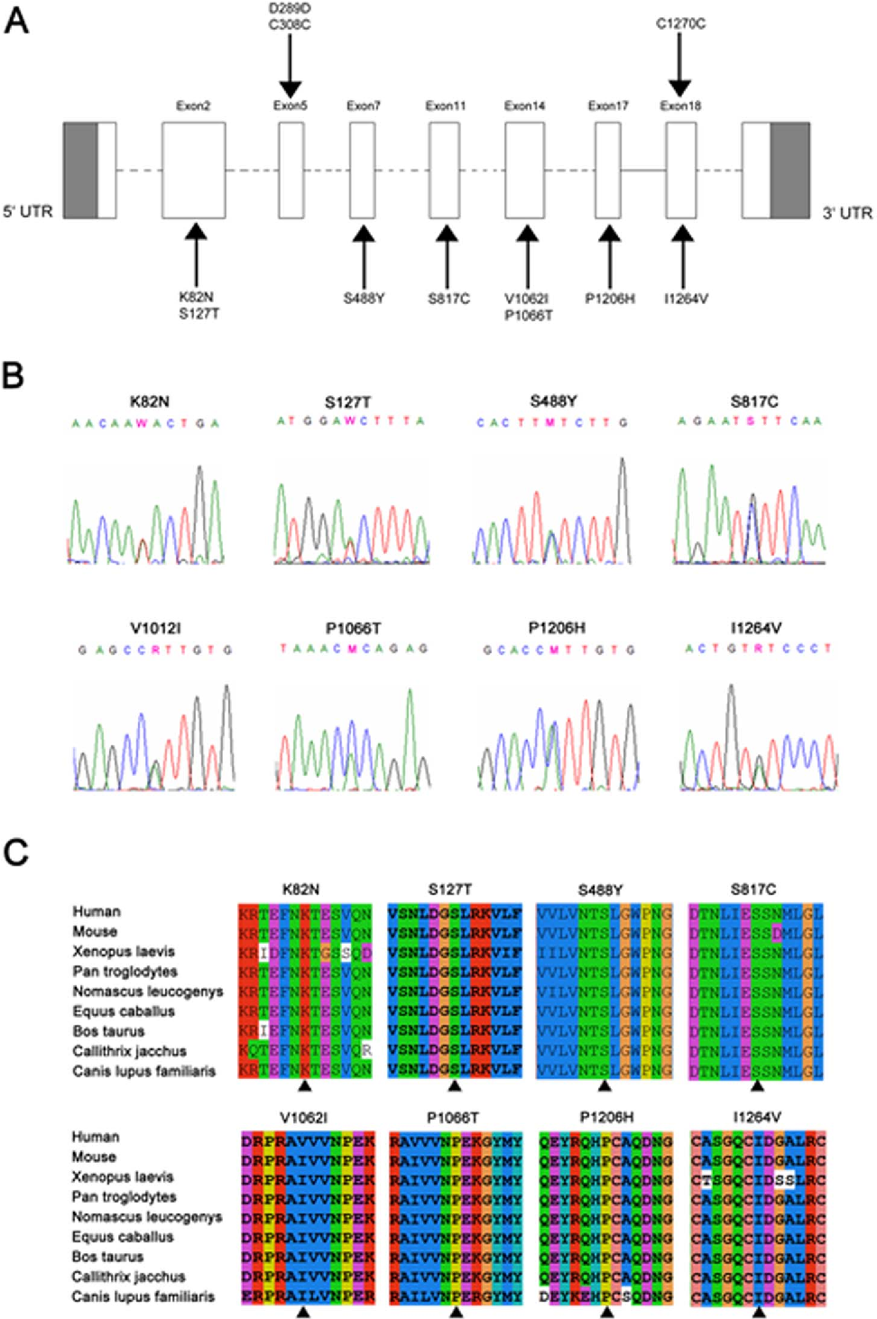 Figure 1. Genomic structure of the exons encoding the open reading frame of LRP6 and identified mutations or polymorphisms. A