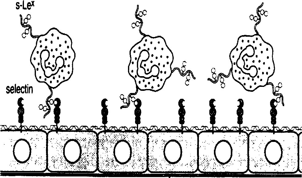 Figure 1 4 From Isolation And Engineering Of A High Affinity