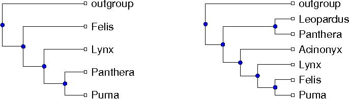 Figure 1 for Optimizing Phylogenetic Supertrees Using Answer Set Programming