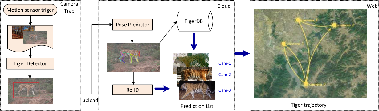 Figure 1 for Amur Tiger Re-identification in the Wild