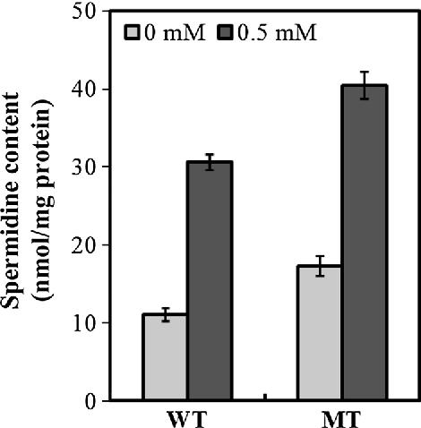 Involvement of Polyamine Binding Protein D (PotD) of Synechocystis