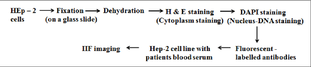 Figure 3 for Role of Class-specific Features in Various Classification Frameworks for Human Epithelial (HEp-2) Cell Images