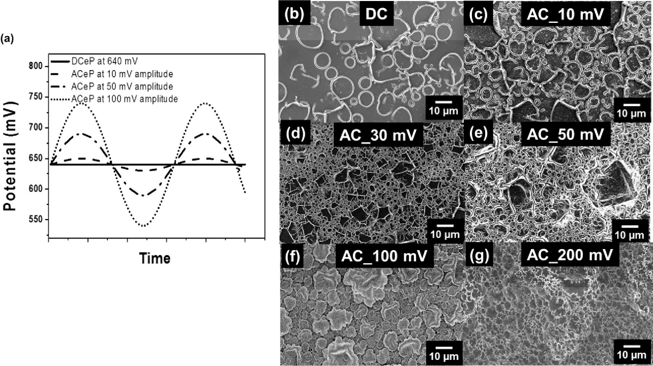 Figure 2. SEM Images of PPy. (a) Polymerization of DCeP and ACeP was expressed by amplitude potential graph. (b-g) SEM images for electrode coated by PPy with polymerization. DCeP and ACeP with 10 mV, 30 mV, 50 mV, 100 mV, 200 mV amplitude, sequentially.