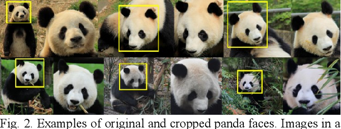 Figure 3 for Giant Panda Face Recognition Using Small Dataset