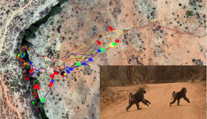 Figure 1 for Inferring Coordination Strategies from Time Series of Movement Data