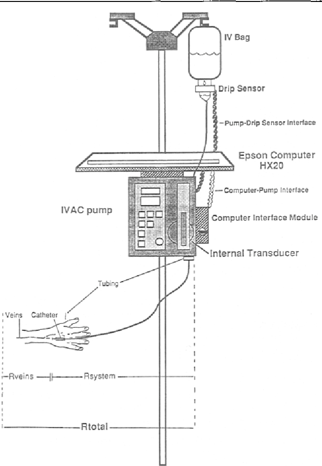 Iv Vein Diagram - Wiring Diagrams Dock