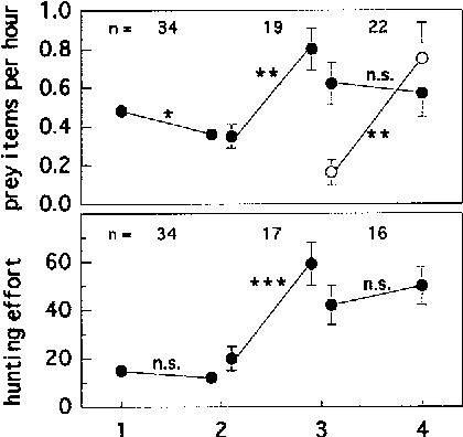Fig. 3 Changes in the prey delivery rate of males (solid circles) and females (open circles), and in the hunting effort of males between the two consecutive breeding stages (I courtship, 2 incubation, 3 early nestling, 4 late nestling period). Only the mean (_+ SE) values of males and females having data from two successive breeding phases are presented. Wilcoxon signed-rank test, *** P<0.001, ** P<0.01, * P<0.05, n.s. not significant