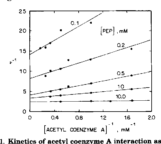 "FIG. 1. Kinetics of acetyl coenzyme A interaction as a function of P-enolpyruvate concentration (PEP). Initial velocities were determined in a coupled assay as described under ""Materials and Methods."" The concentrations of P-enolpyruvate are shown on the graph. The solid lines are calculated as described in the text (34). The solidpoints are actually observed data."